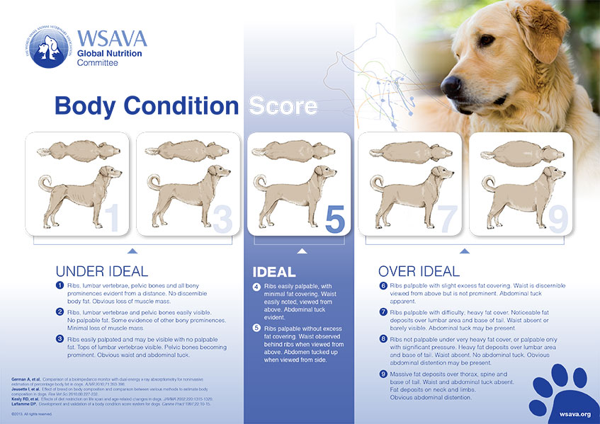 Nutritional Calculator For Dogs